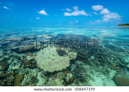 Perfect tropical island paradise beach and coral - stock photo