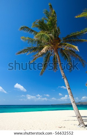 Perfect tropical white sand beach with palmtree - stock photo