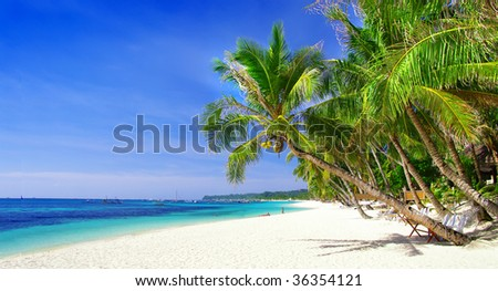 perfect tropics - stock photo