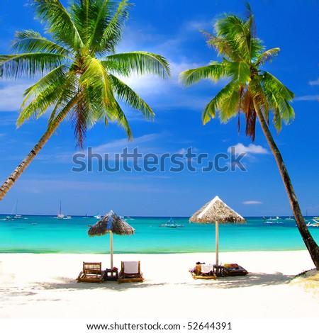 perfect tropics - stock photo