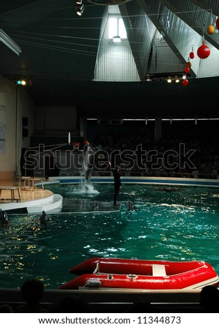 Performance in dolphinarium. Dolphine scores in basketball.