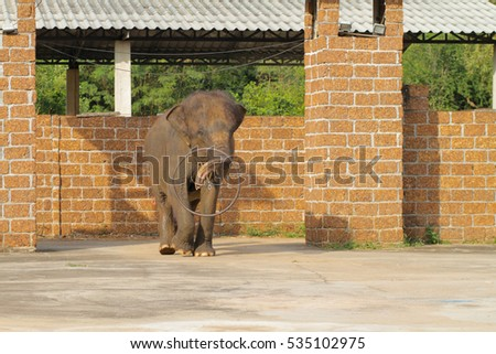Performance of Asia Elephant
