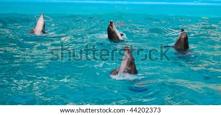 Performance with four dolphins rotating hula hoops in a pool - stock photo
