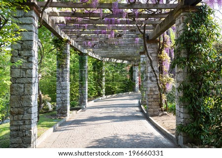 pergola with Wisteria in villa Taranto Italy - stock photo