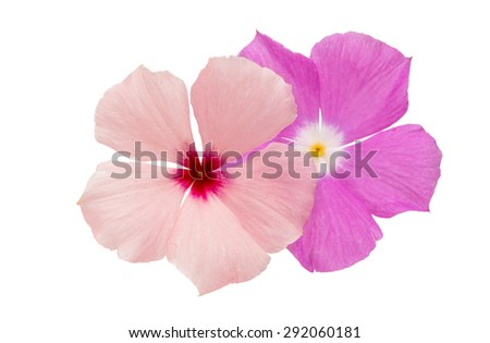 periwinkle pink on a white background - stock photo