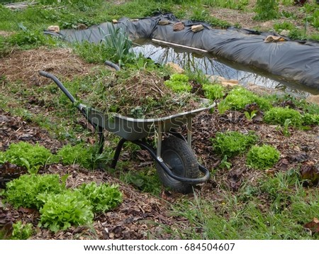 Permaculture Garden With Wheelbarrows Filled With Weeds, A Pond And Some  Salads Growing In The