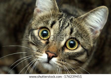 Persian cat - stock photo