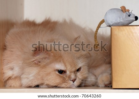 Persian cat and her toy mouse - stock photo