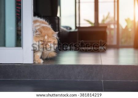 Persian cat behind the door - stock photo