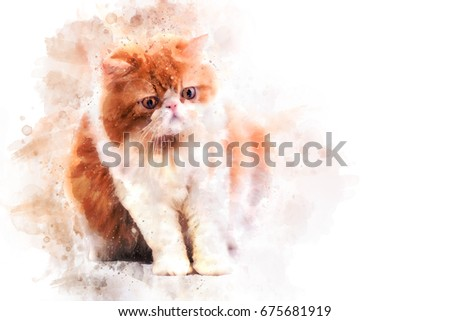 Persian cat on white background water color filter,