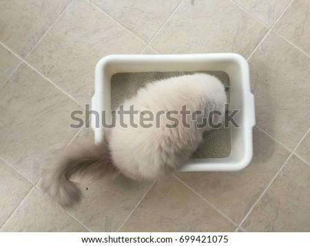 Persian Cat Pooping In Sand, Toilet, Top View