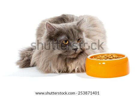 Persian cat sitting near the bowl of dry food, isolated on white