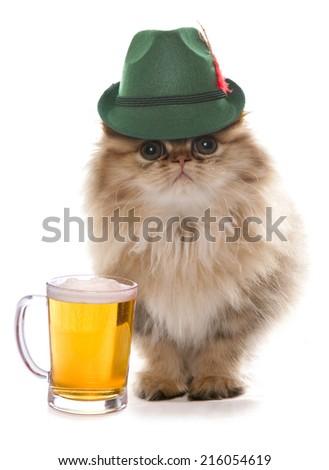 persian cat wearing bavarian beer festival hat - stock photo