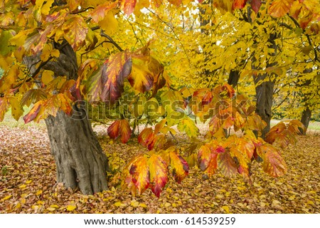 Alessandrozocc S Portfolio On Shutterstock