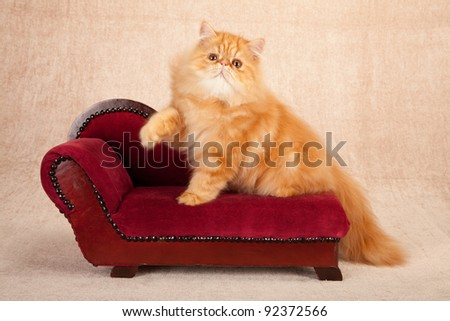 Persian kitten on red chaise sofa on beige background - stock photo