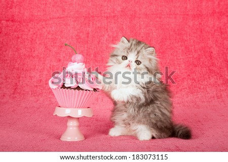Persian kitten with large cupcake on cupcake stand on bright pink background - stock photo