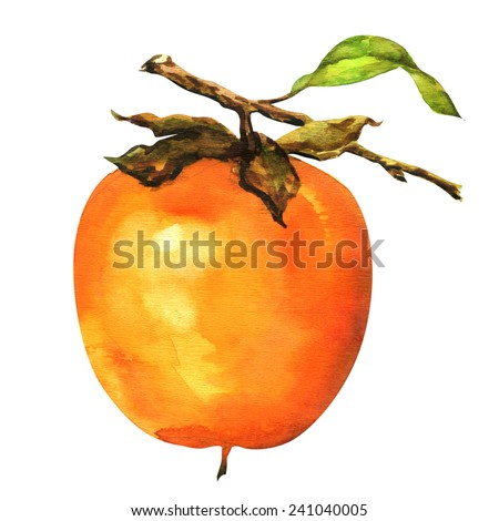 persimmons on the branch isolated, watercolor painting on white background - stock photo