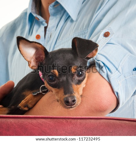 Person holding a gazing puppy pincher