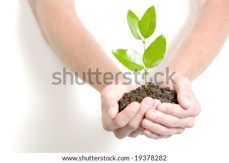 Person holding a young plant in the studio - stock photo