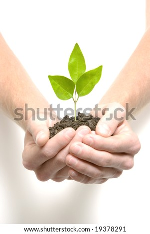 Person holding a young plant sprout in the studio - stock photo