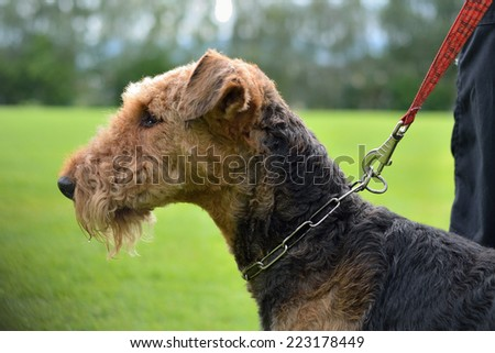 Person holding dog on leash - stock photo