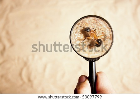 person looking an ant with a magnifying glass - stock photo