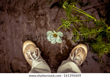 Person looking down at a flower - stock photo