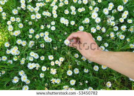 Person pick up the daisywheels. Conceptual design. - stock photo
