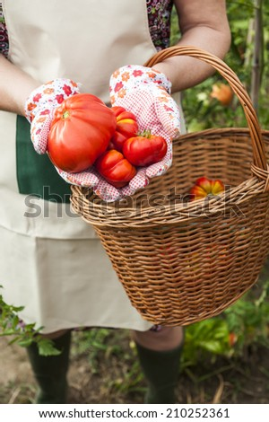 Person showing tomatoes