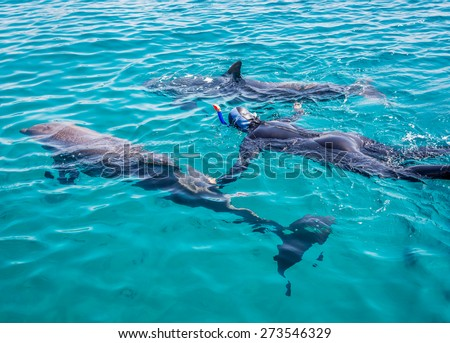 Person snorkeling with dolphins at tropical resort