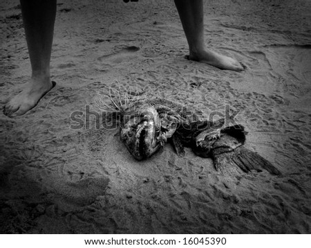 Person standing over dead fish - stock photo