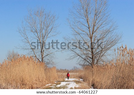 Person Walking along Path between Two Trees in the Winter - stock photo
