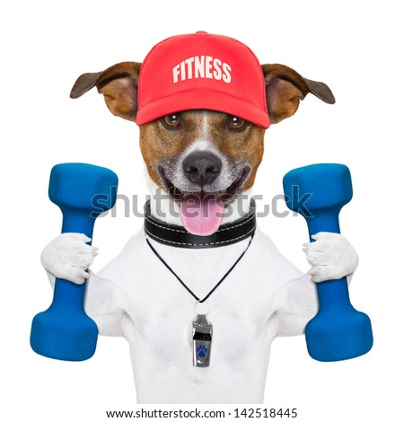 personal trainer dog with blue dumbbells and red cap - stock photo