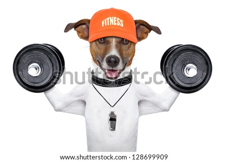 personal  trainer dog with dumbbells and a whistle - stock photo