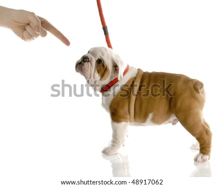 persons finger scolding a bad puppy on a red leash with reflection on white background - stock photo