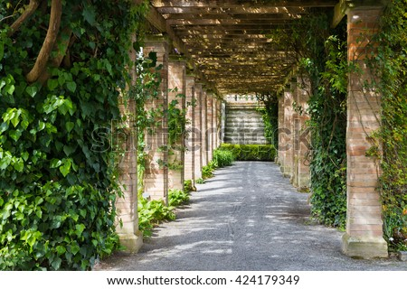 Perspective tunnel with ivy in a park - stock photo