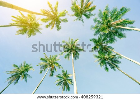 Perspective view of coconut palm trees and sky from the beach upside down - El Nido Palawan in Philippines - Wide angle view of exclusive destination theme in sunny day - Warm greenish vintage filter - stock photo