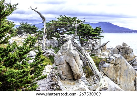 Pescadero Point at 17 Mile Drive. The area of Pescadero Point known as Ghost Tree gets its name from the white and gnarly local cypress trees in the area which bring to mind ghosts & anything spooky. - stock photo