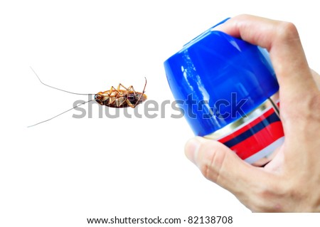 Pest Control by Spraying on Cockroach - stock photo