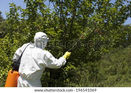 Pesticide spraying - stock photo