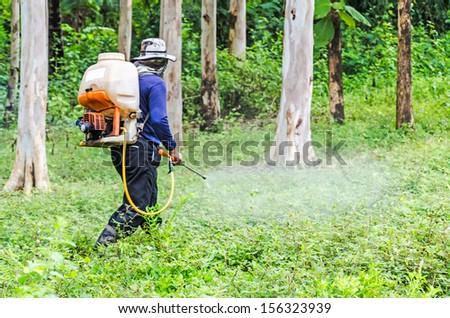 Pesticides Spraying. Farmer kills weed spraying pesticides in Eucalyptus garden - stock photo