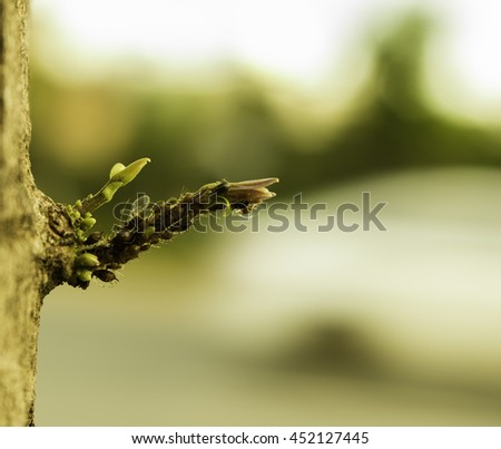 Pests eat tree buds life Linden bud, embryonic shoot. macro view tree branch buds, soft background. spring time concept, soft , beautiful, beauty, begin, background, beautiful, beauty, begin - stock photo
