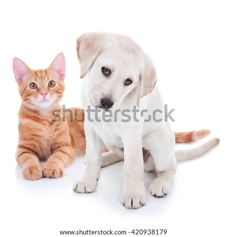 Pet animal puppy dog and kitten cat together isolated on white