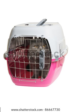 Pet carrier with cat. Isolated on white background. - stock photo