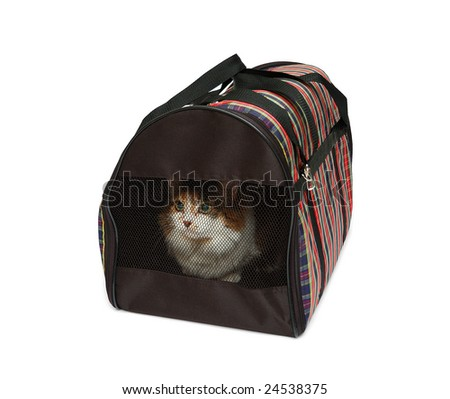 Pet carrier with cat isolated over white background - stock photo