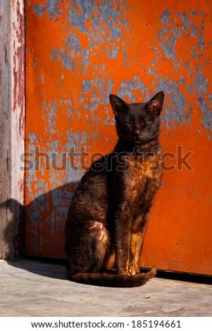 Pet cat sits in front of door with peeling paint - stock photo