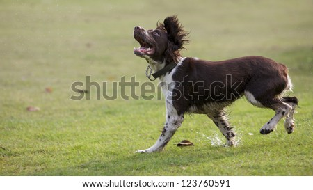 pet dog - stock photo