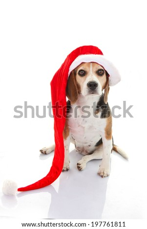 pet dog christmas holiday gift or present in santa hat