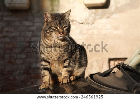 pet dogs and cats - stock photo