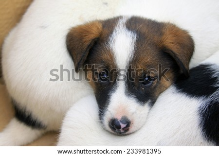 Pet dogs, closeup of photo - stock photo
